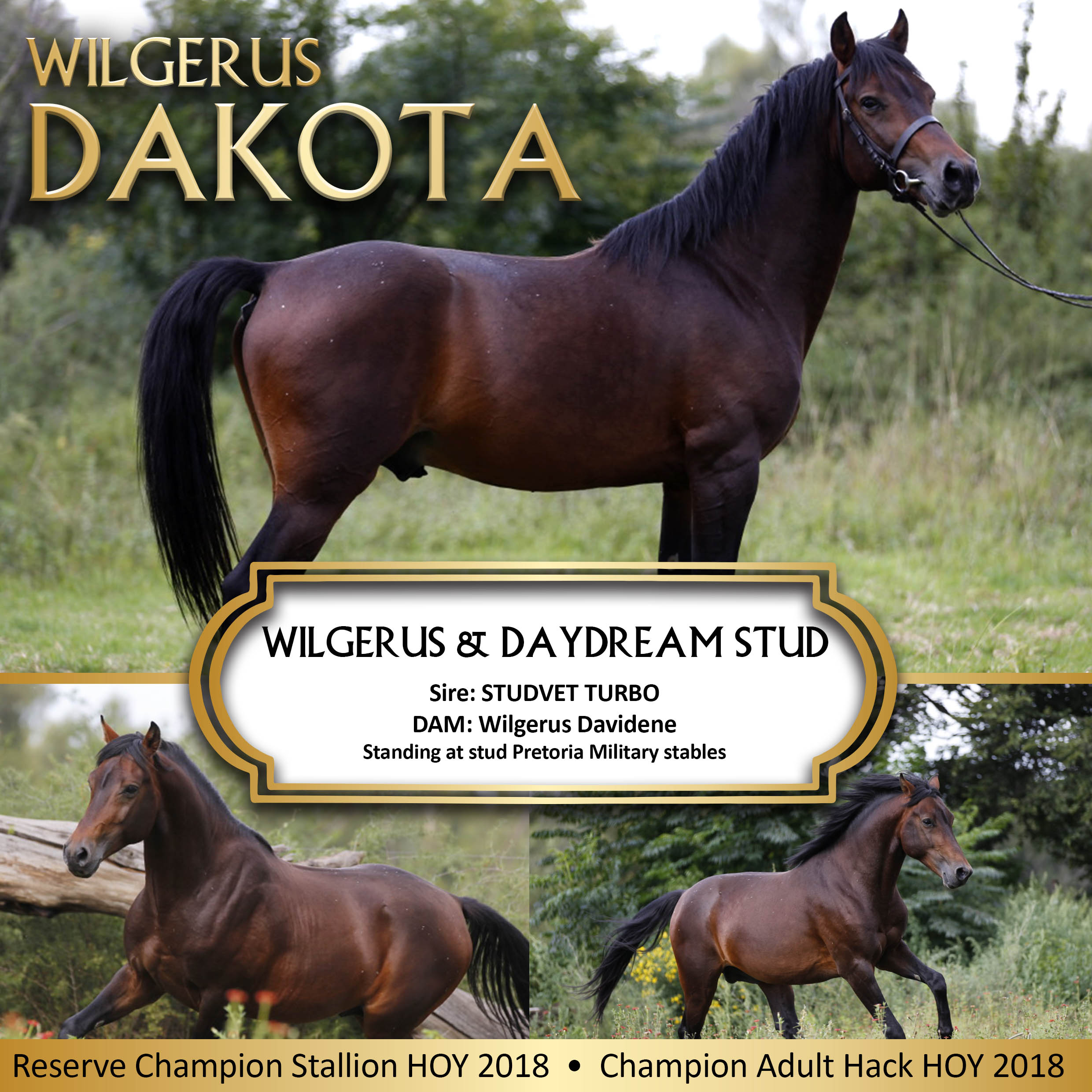 Wilgerus Dakota